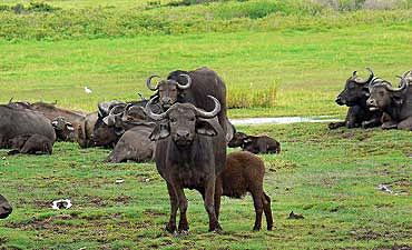 GUIDE ON AMBOSELI PARK