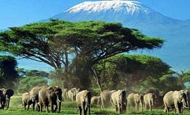 SAFARI & TOUR IN AMBOSELI PARK