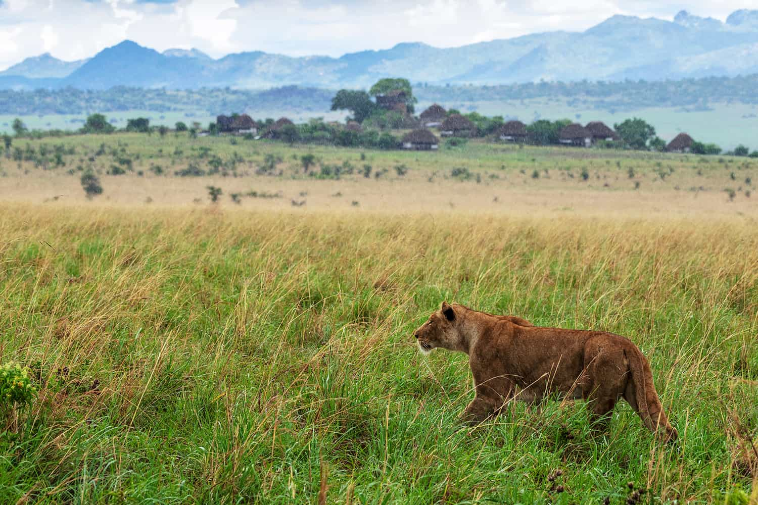 What Are The Wildlife Experiences In Kidepo Valley National Park