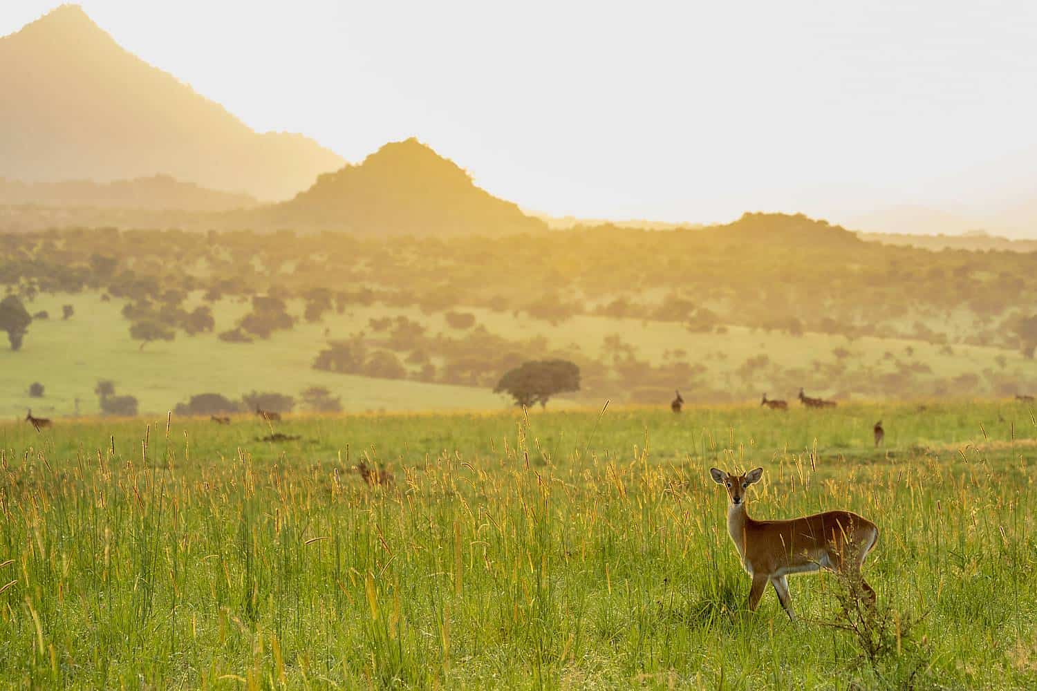 Exploring Kidepo Valley's Scenic Ecology