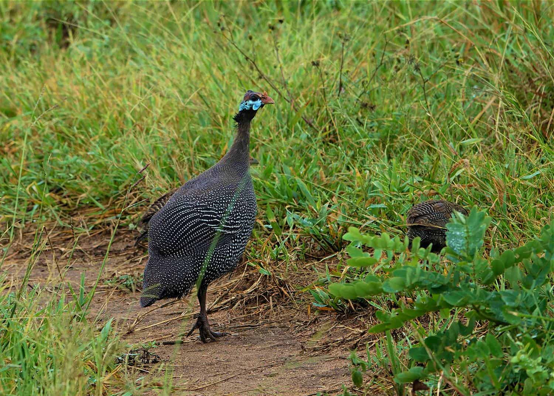 The Birding Hotspot Of Namamukweny Valley
