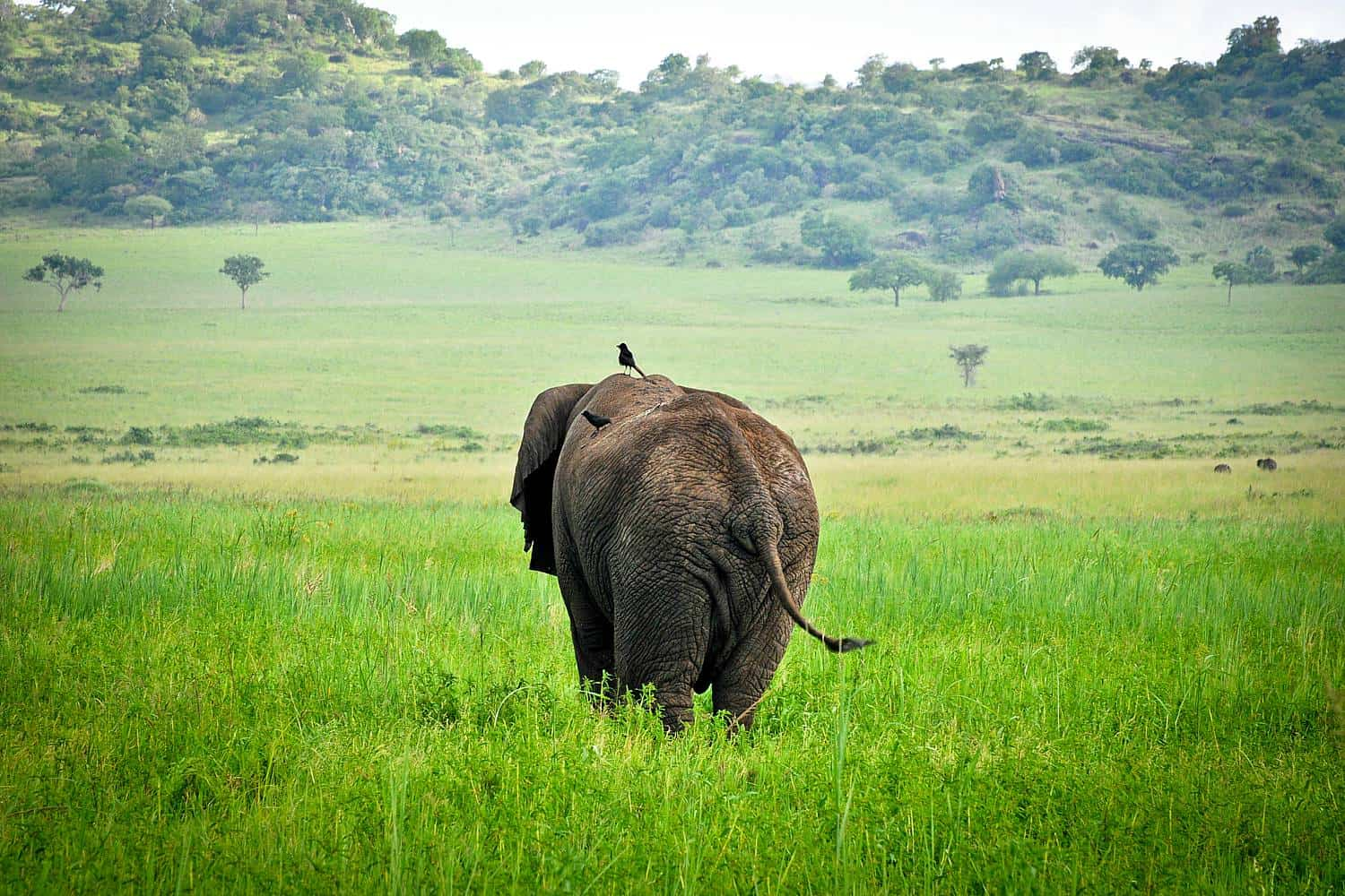 Best Time, Seasons & Months To Go On Safari In Kidepo Valley