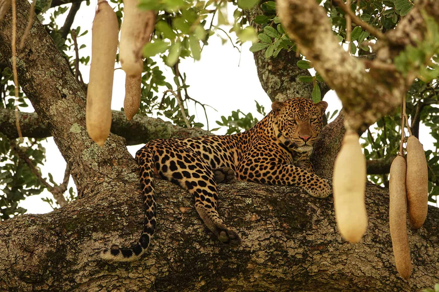 What To Expect From A Private & Custom Safari Vacation In Uganda