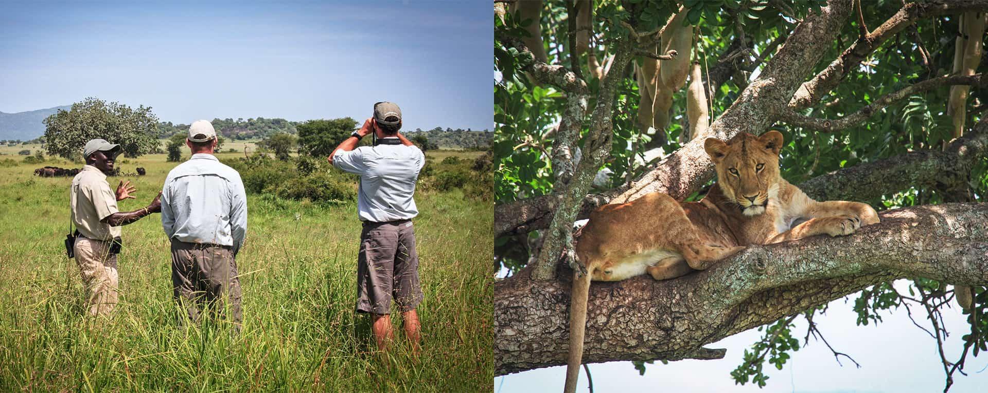 Kidepo Valley Safari & Tour