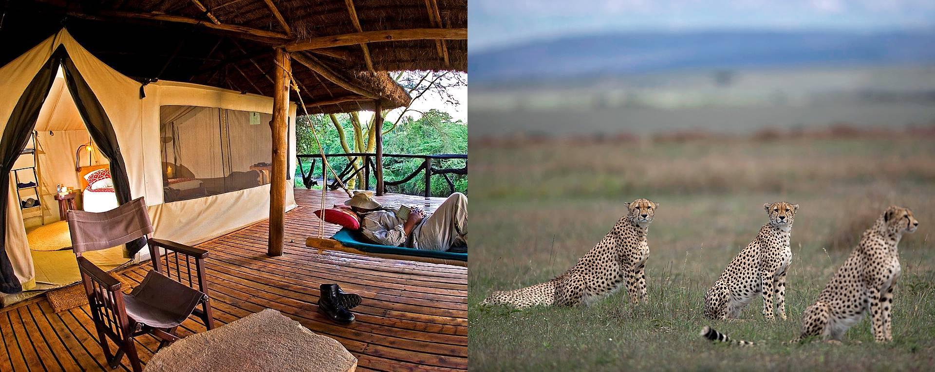 Expert Rating Reviews >> Basecamp Masai Mara, Masai Mara - Kenya - AfricanMecca ...