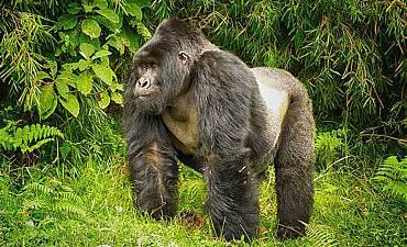 VALUE TIER 3 - BEST OF RWANDA SAFARI