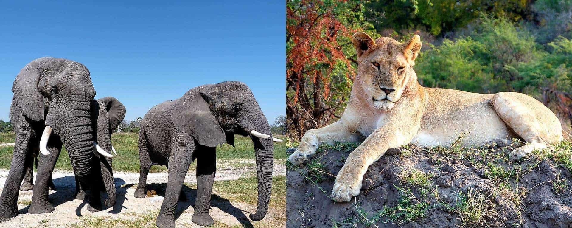 AfricanMecca Safaris - Distinctive Travel & Wildlife Tour Experts