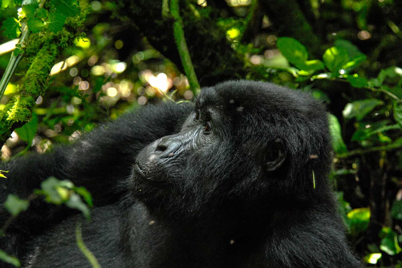 Our Top 6 Safari Activities In Bwindi & Things You Can Do & See In Bwindi