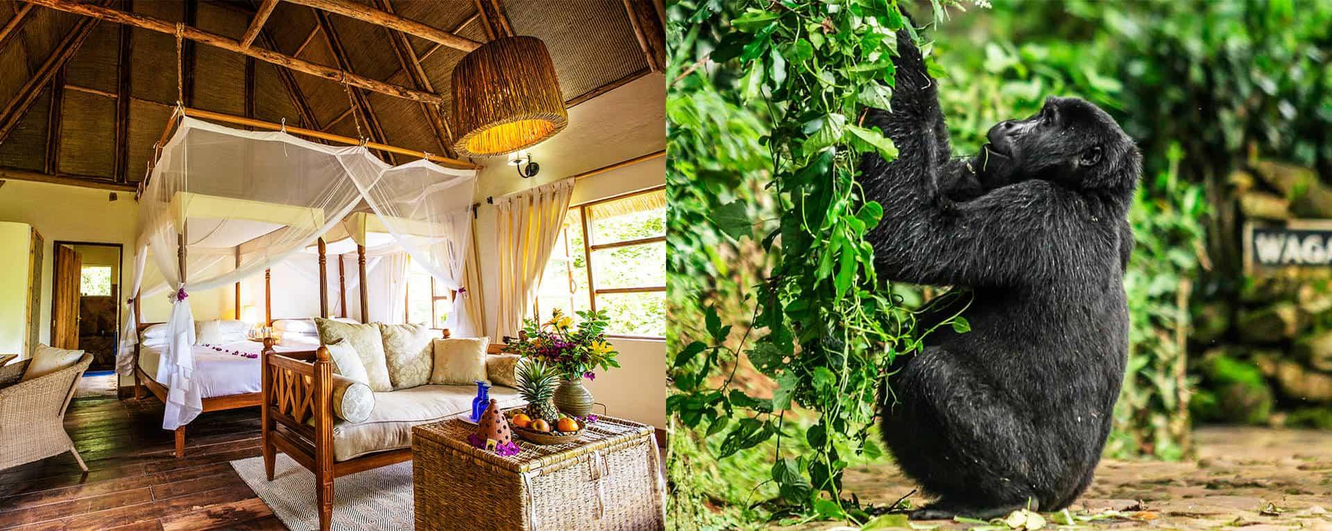 Exemplary Forest Stayovers For Gorilla & Chimpanzee Trekking Safaris