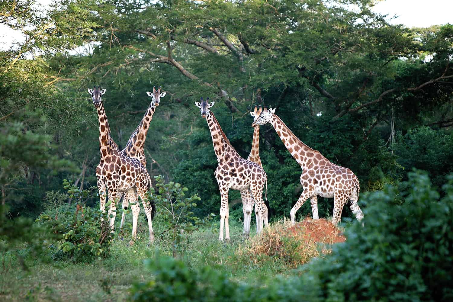 What Are The Wildlife Experiences In Murchison Falls National Park