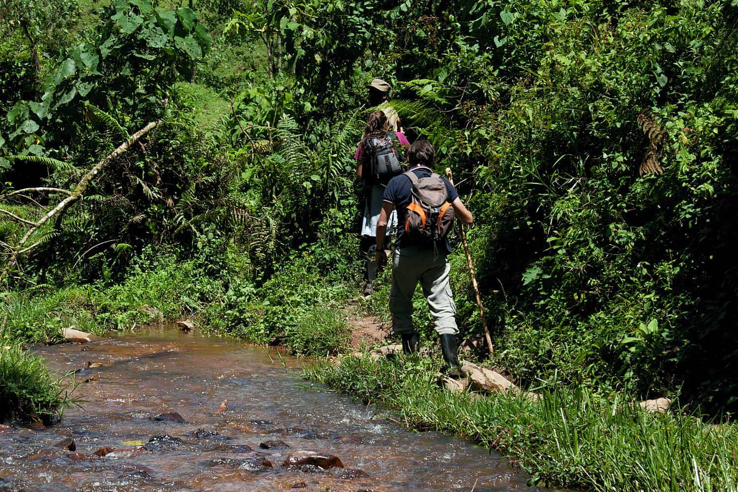 Permitted Age Limits For Gorilla Trekking In Uganda