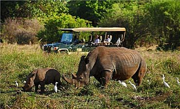 CUSTOM & PRIVATE KENYA SAFARIS