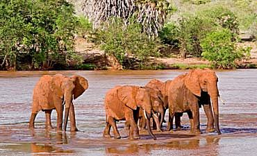 SAFARI & TOUR IN TSAVO EAST