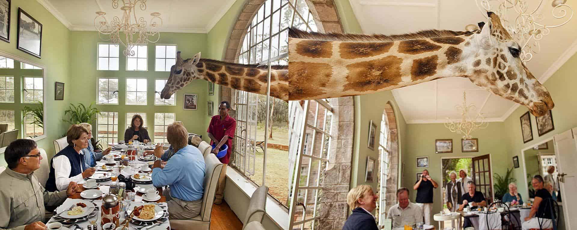 giraffemanor5
