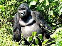 Africa safari planning