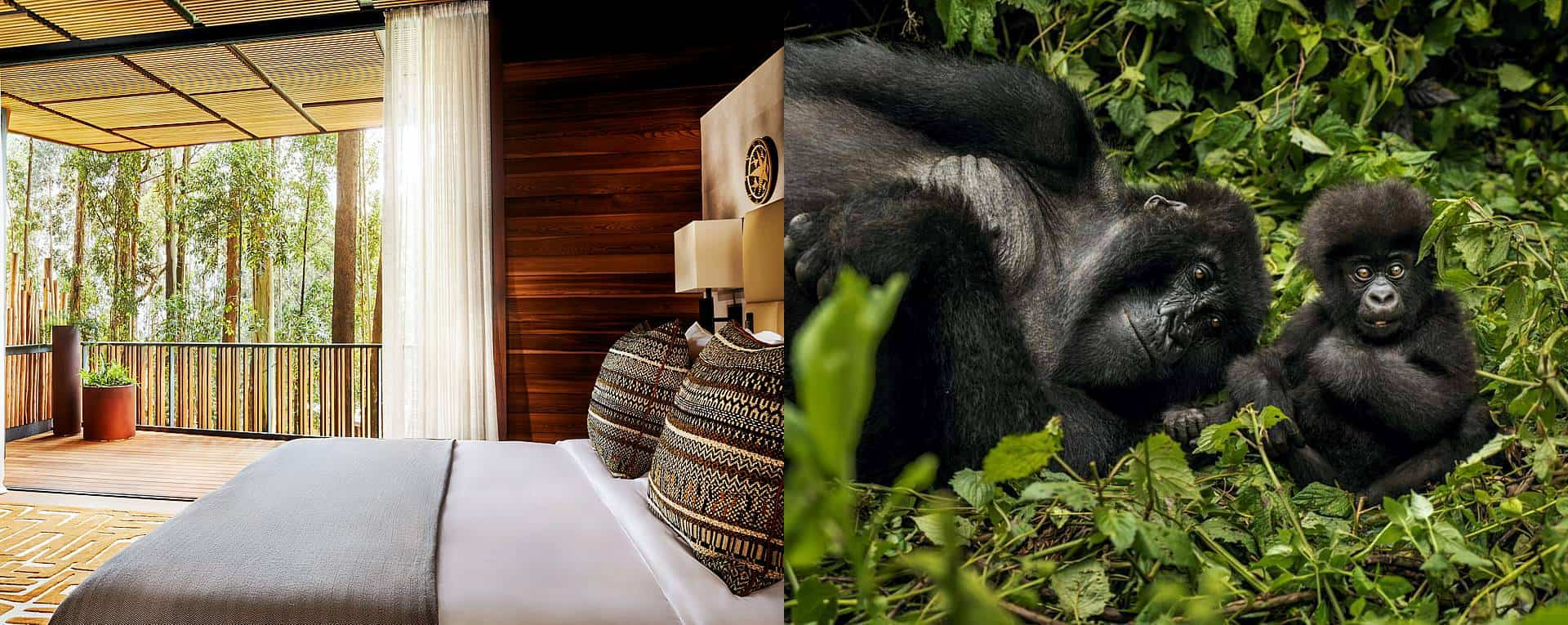 One&Only Gorilla's Nest Lodge