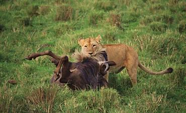 PREMIER TIER 1 - KENYA & TANZANIA WILDEBEEST MIGRATION SAFARI - 9 DAYS