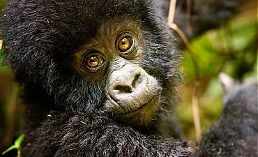 DELUXE TIER 2 - HIGHLIGHTS OF RWANDA SAFARI