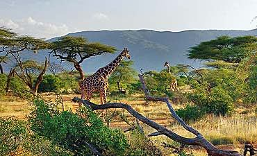 GUIDE ON LAIKIPIA