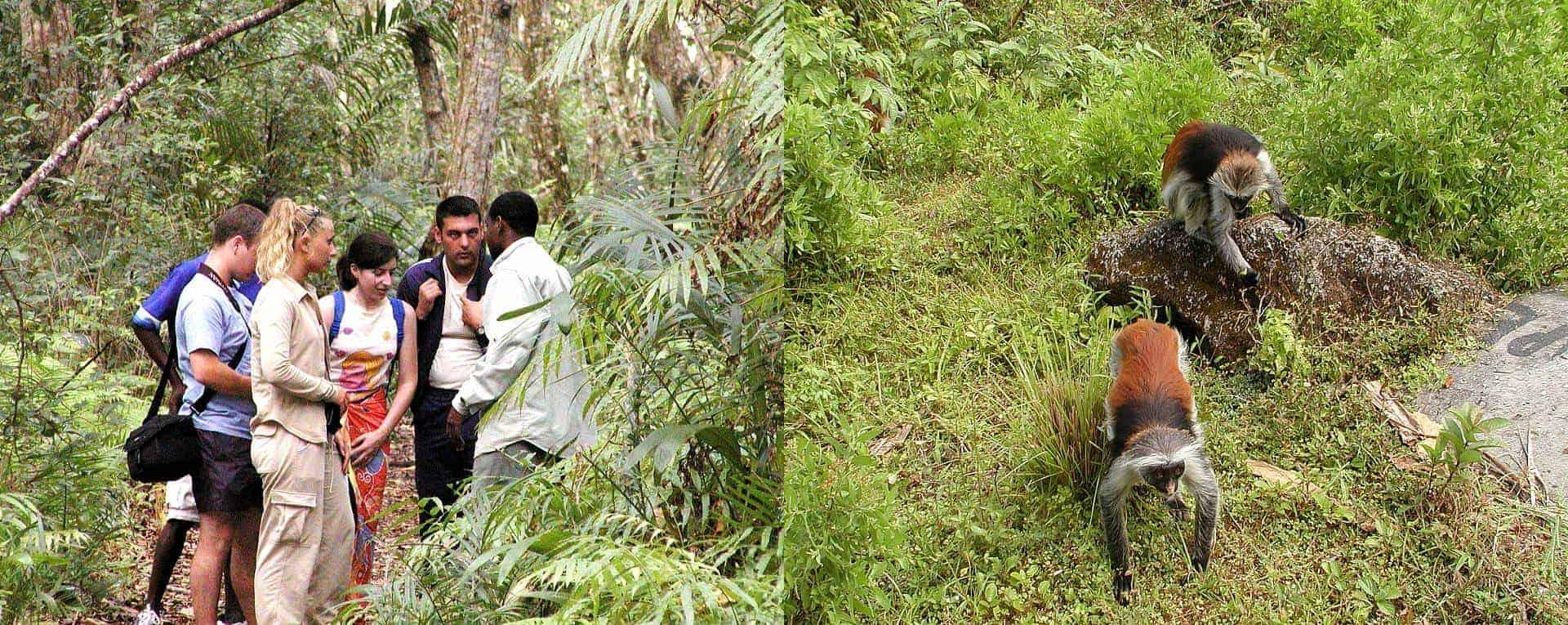 jozaniforest2