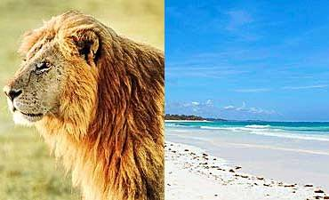 KENYA BUSH & BEACH SAFARIS