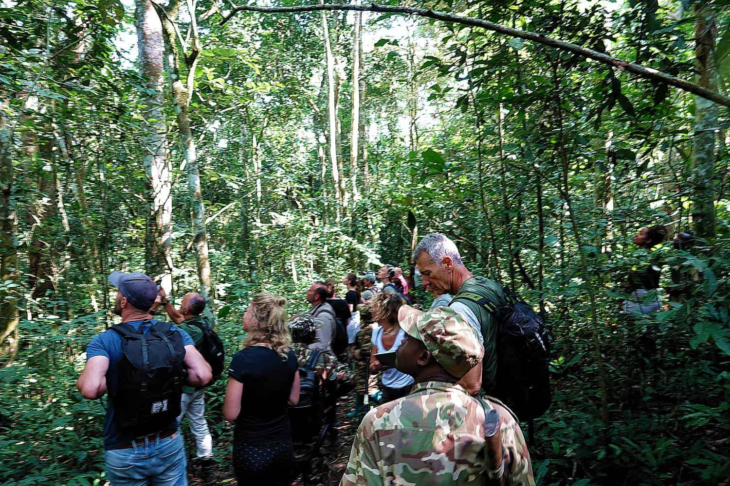 How Do You Get A Permit for Viewing The Chimpanzees In Uganda