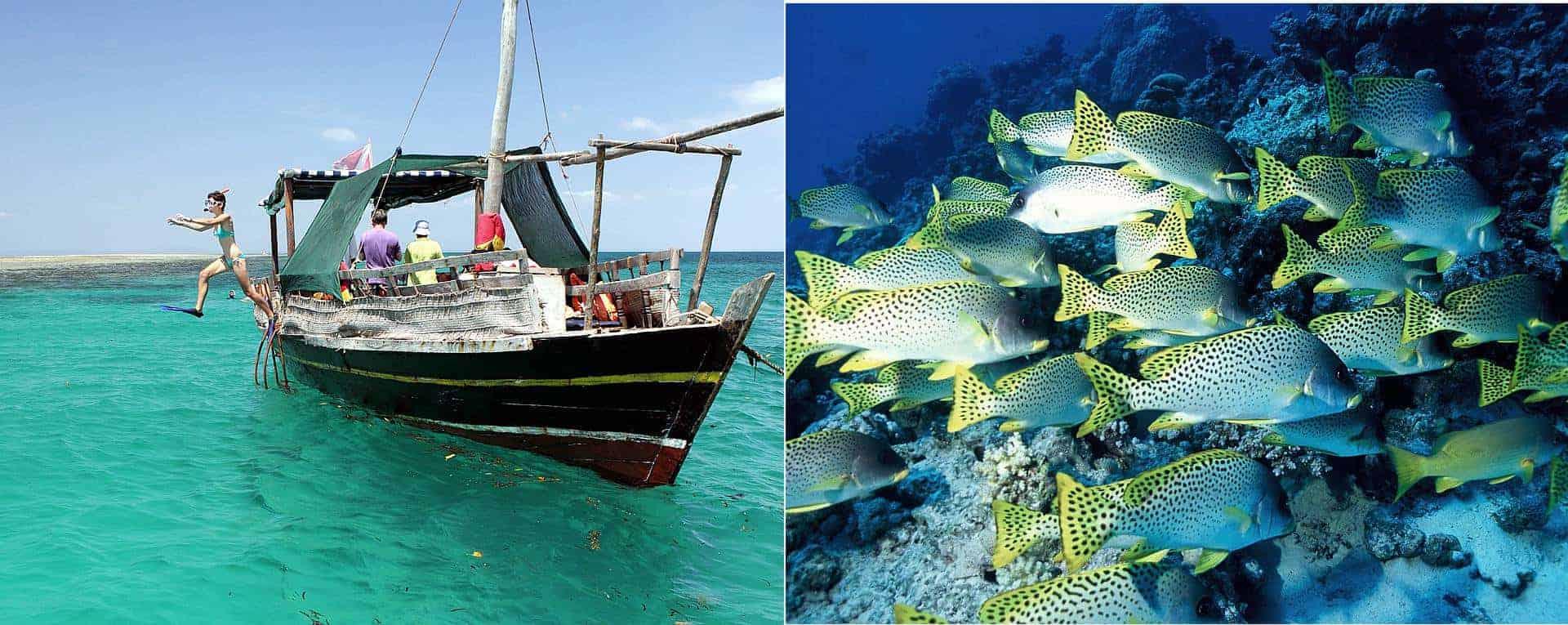 Wasini Island Kisite Marine Dhow Tour Experience In Mombasa