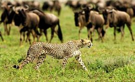 SERENGETI SAFARI & TOUR