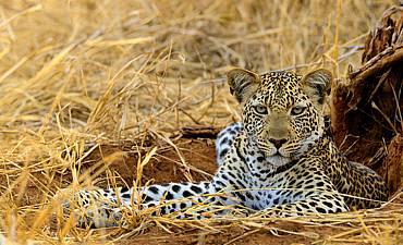 WILDLIFE SAFARIS IN AFRICA