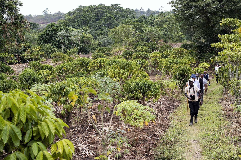 Nature Walks, Scenic Hikes & Primate Treks In Queen Elizabeth