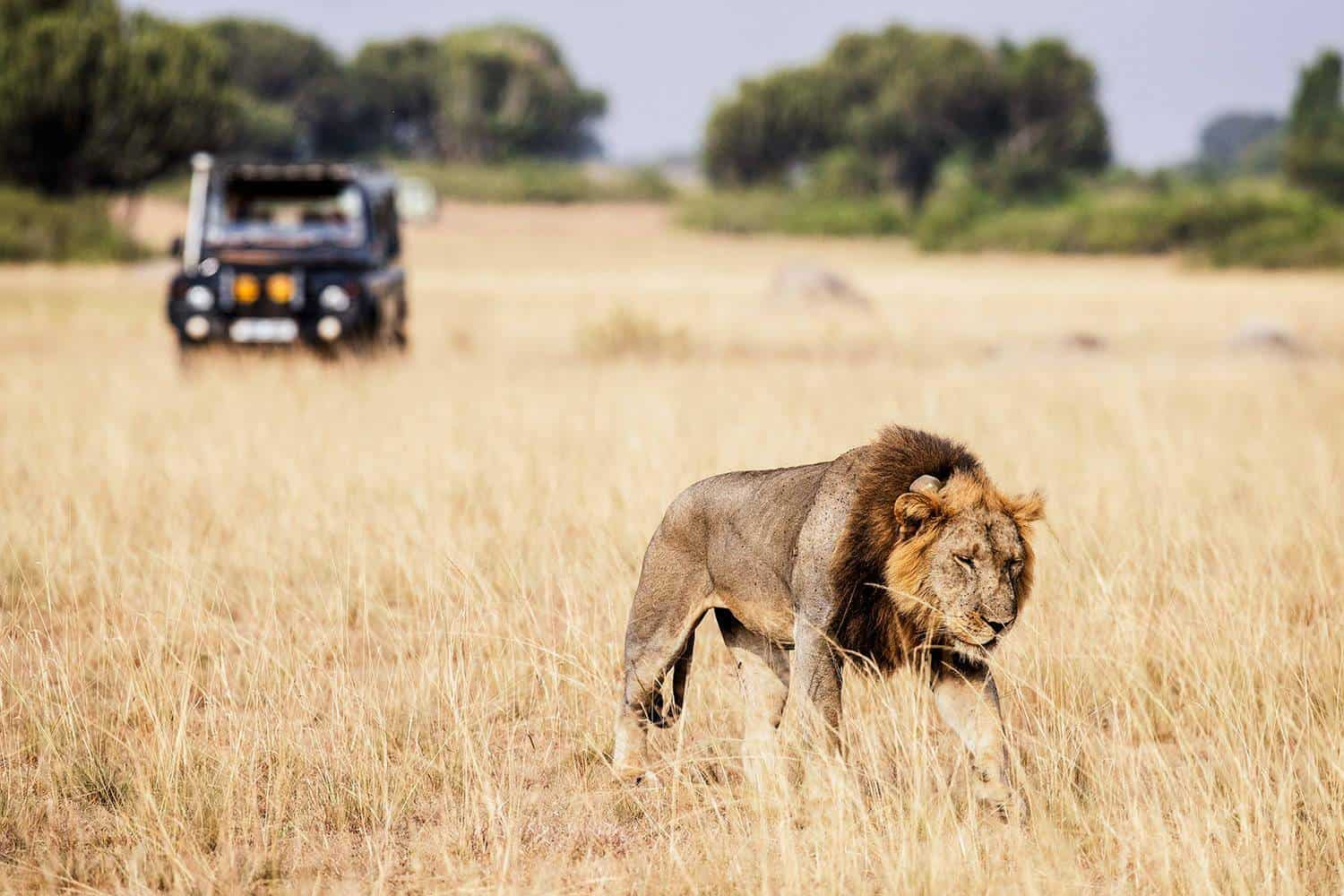 What To Expect From A Uganda Wildlife Safari On Your Honeymoon Vacation
