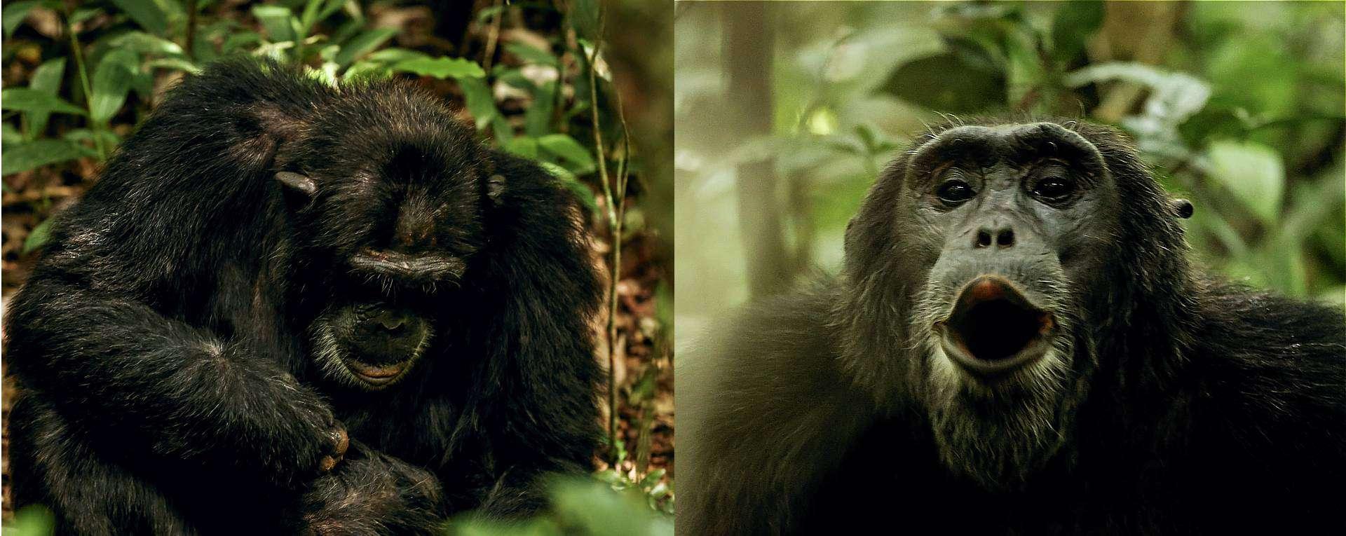 Kibale Chimpanzee Safari Trek & Tour