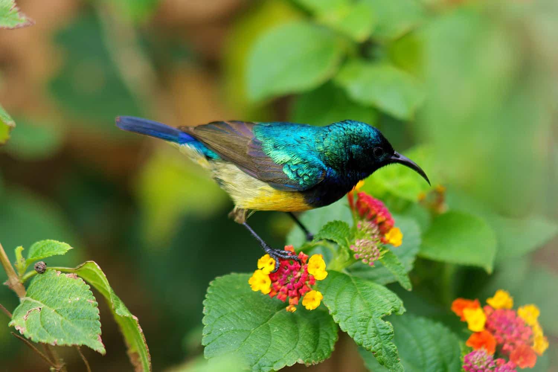 Bigodi Wetlands Sanctuary & The Kanyanchu Birding Area
