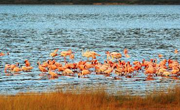 GUIDE ON LAKE BOGORIA