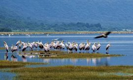 LAKE MANYARA SAFARI & TOUR