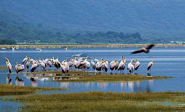 SAFARI & TOUR IN LAKE MANYARA
