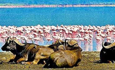 SAFARI & TOUR IN LAKE NAKURU