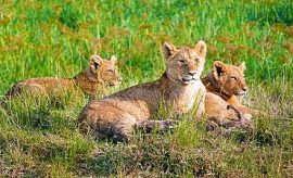 WILDLIFE SAFARIS IN KENYA