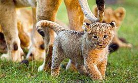 KENYA WILDLIFE SAFARI FROM LAMU