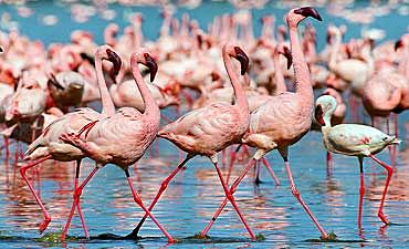 BIRDING SAFARIS IN KENYA