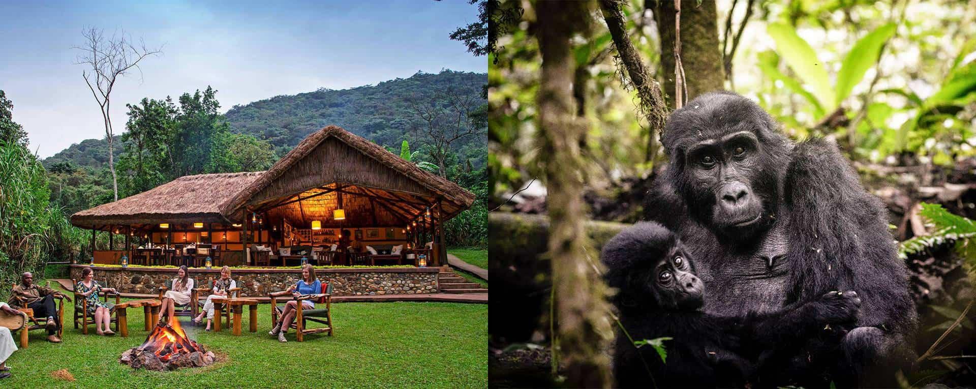 Luxury Safaris Trip Planning Guide For Uganda