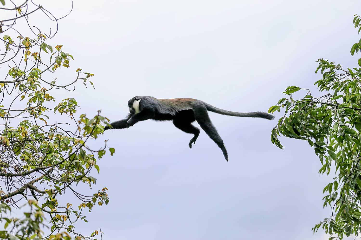What Kind Of Fauna (Animals) & Flora (Vegetation) Exist In Bwindi