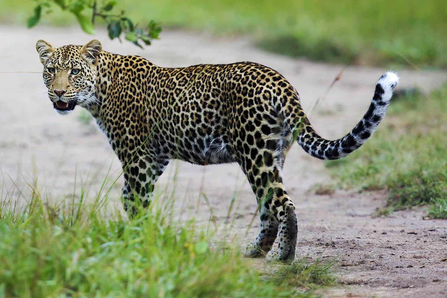 What Are The Wildlife Experiences In Lake Mburo National Park