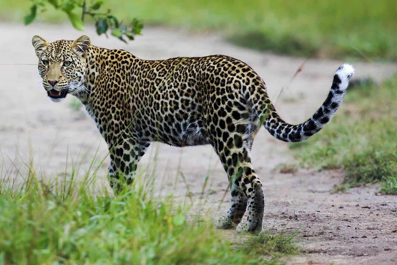 How To Plan The Best 2021-2022 Family Safari For Uganda