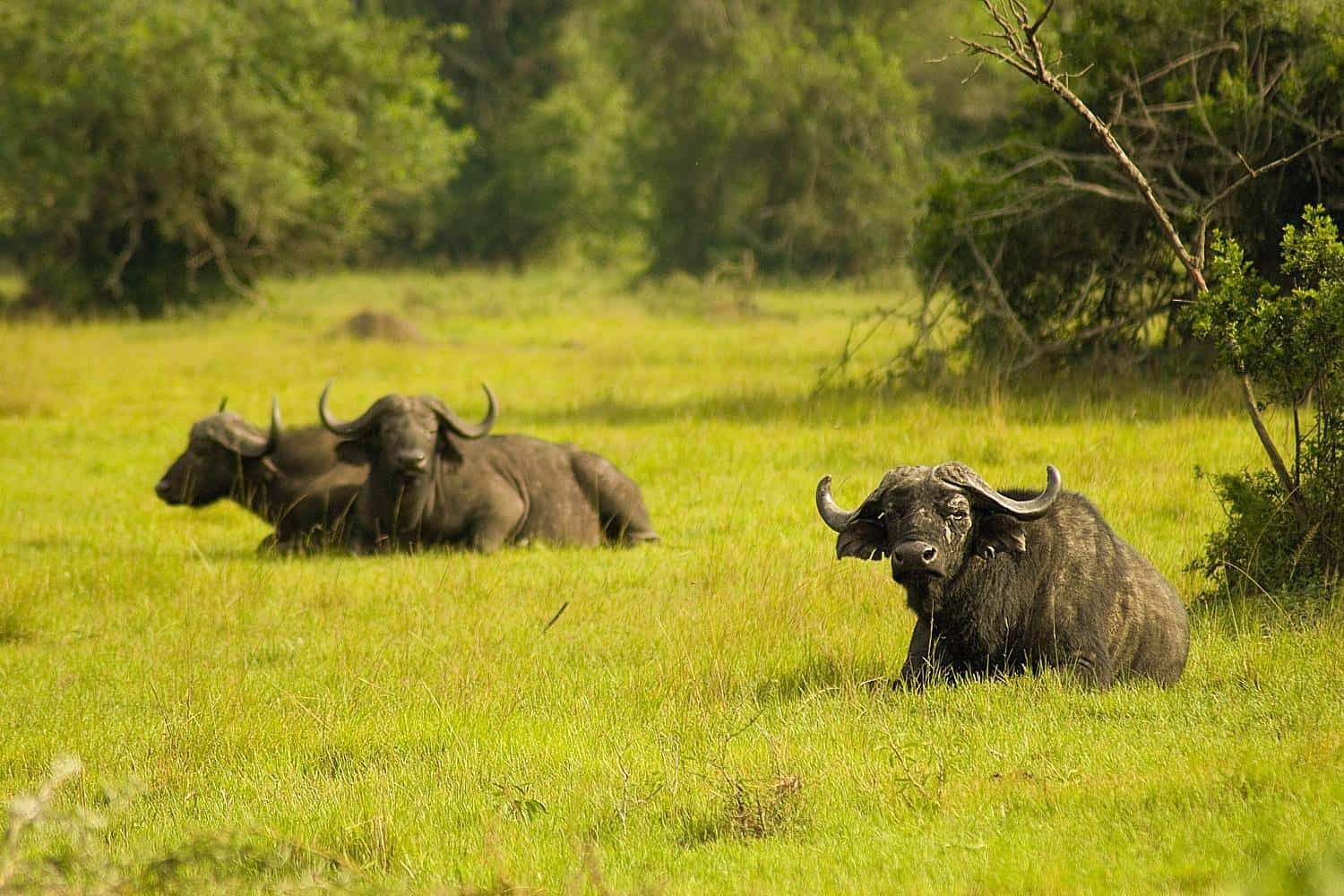 Best Time, Seasons & Months To Go On Safari In Lake Mburo