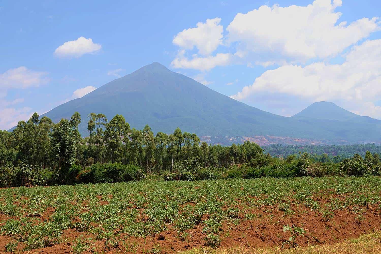 Climb The Extinct Virunga Volcanoes Of Mgahinga Park