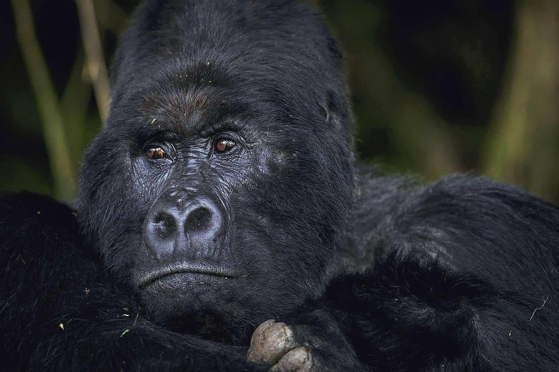 Mgahinga Gorilla National Park - An Overview