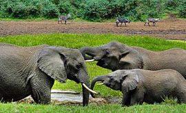 SAFARI & TOUR IN MOUNT KENYA