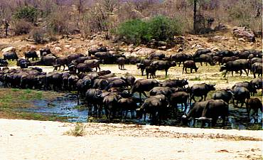 BEST TIME TO VISIT RUAHA