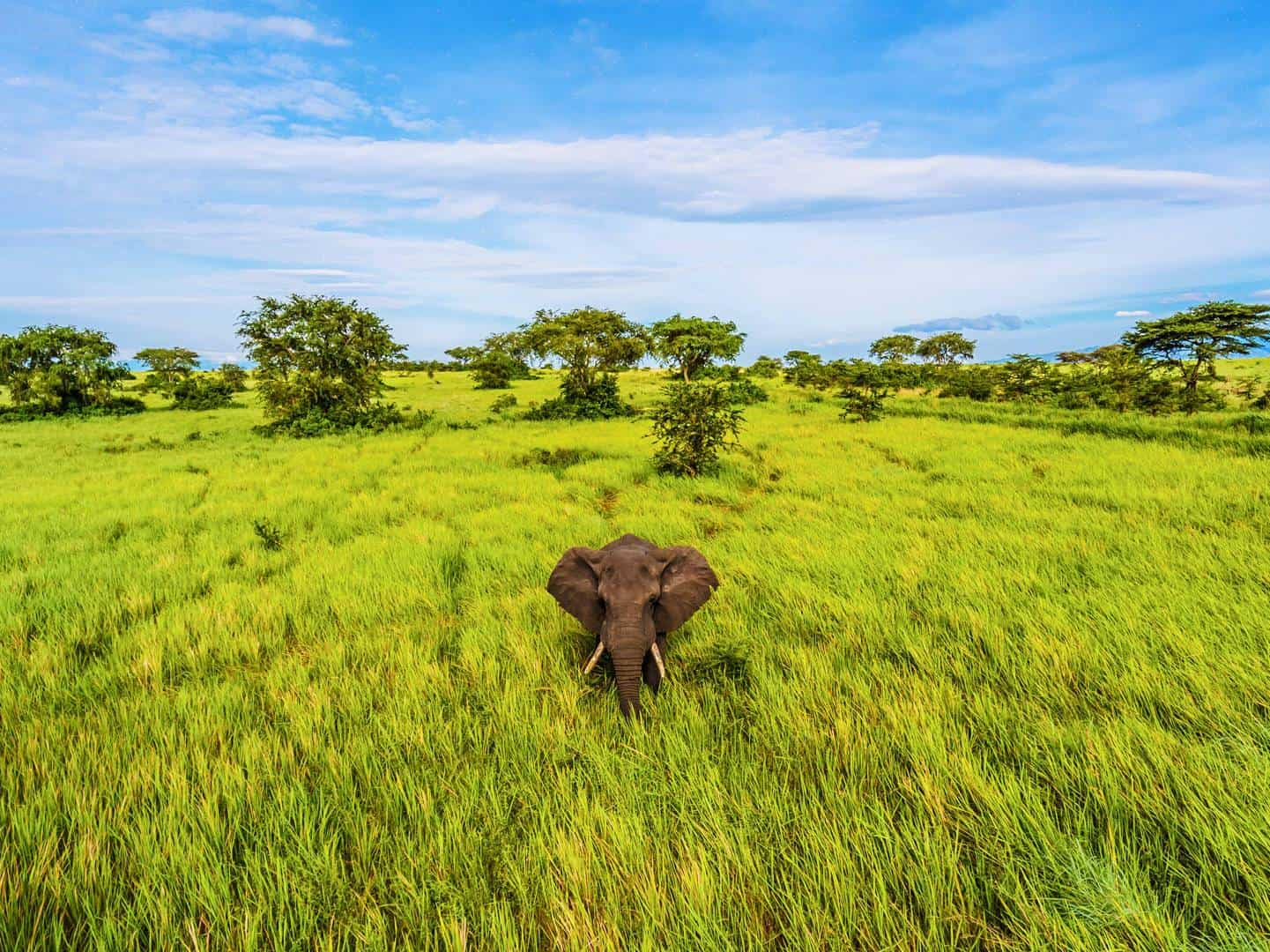 What Are The Best Times For Parents & Children To Visit Uganda On A Family Safari